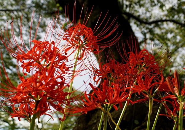 見上げる花