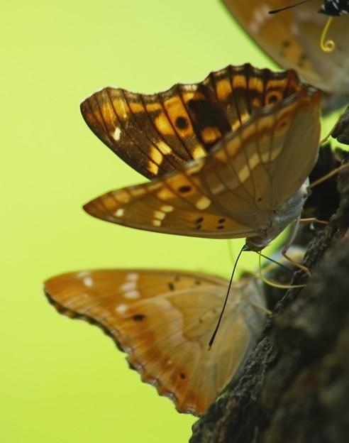 蜜に集まる