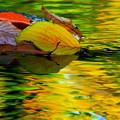 Photos: 秋の流れ
