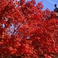 Photos: お寺の紅葉
