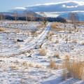 写真: 冬の高原