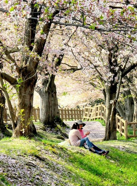 桜の木の下で(かたらい)