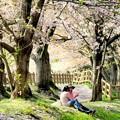 写真: 桜の木の下で(かたらい)