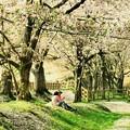 写真: 桜の木の下で