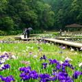 写真: 菖蒲園に憩う