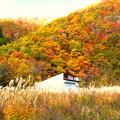写真: 全山紅葉