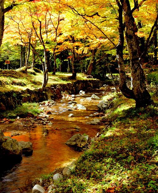 Photos: 紅葉を映して流れる
