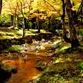 写真: 紅葉を映して流れる