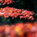 Photos: 赤の共演