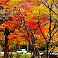 写真: 紅葉の中をドライブ