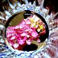 Photos: グラスの中で咲く