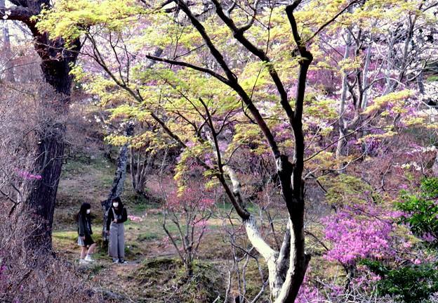 公園散策 桜に誘われて