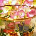 Photos: 紫陽花に乾杯