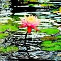 Photos: モネの池?