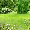 Photos: English garden