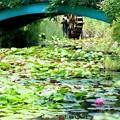 Photos: 命名 モネの池