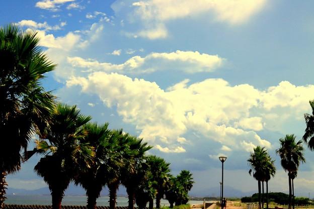 夏の空に向かって