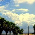Photos: 夏の空に向かって