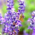 花と蝶(?)