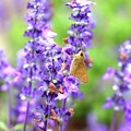 Photos: 花と蝶(?)