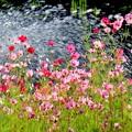噴水ショーに花を添えて