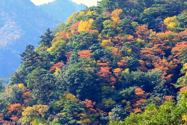 Photos: 山にぎやか
