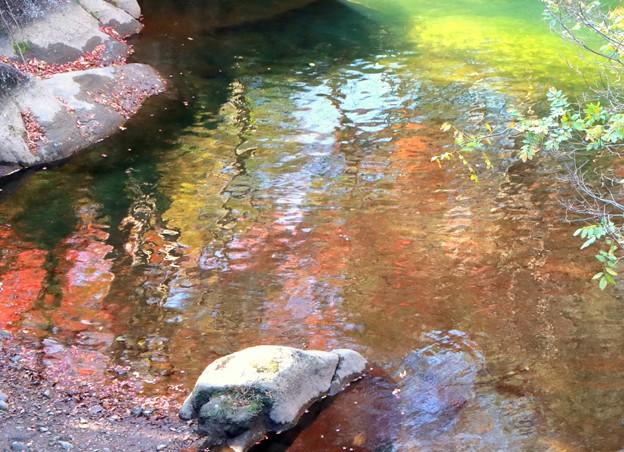 水面に紅葉を映して