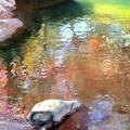 Photos: 水面に紅葉を映して