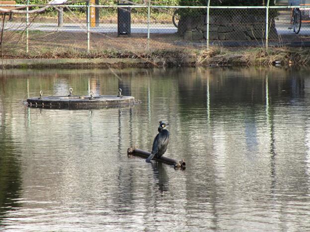 池に鳥がいる