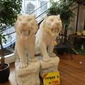 2匹のトラ