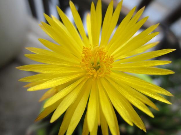 サボサボの花