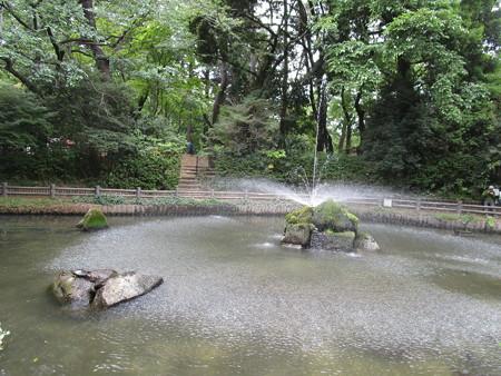 与野公園の池