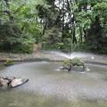 Photos: 与野公園の池