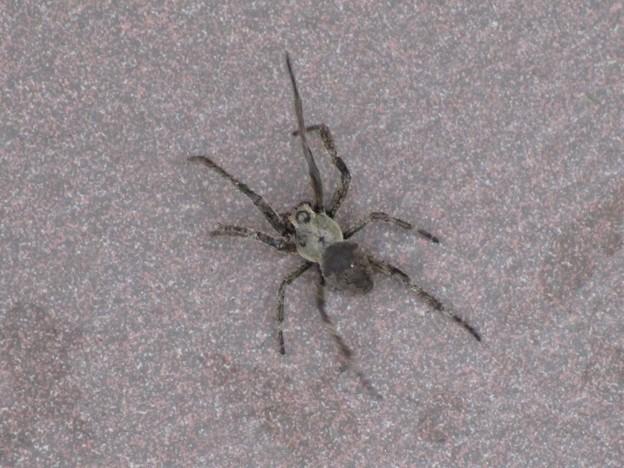 大きな蜘蛛Σ( ̄ロ ̄lll)