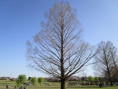 何の樹かな?