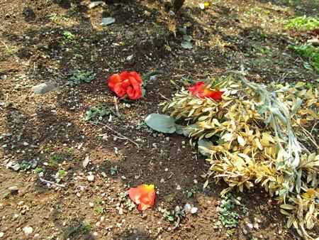 咲いていたバラも切り落とされ
