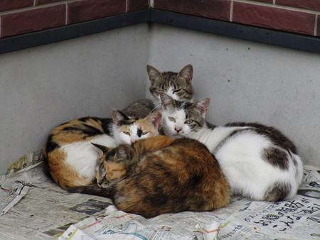 猫4匹 その2