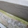 Photos: 側溝が緑