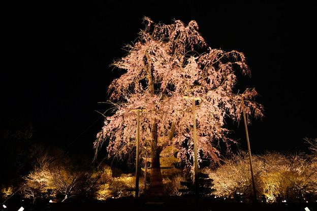 2019-03-31-東寺夜間拝観_04