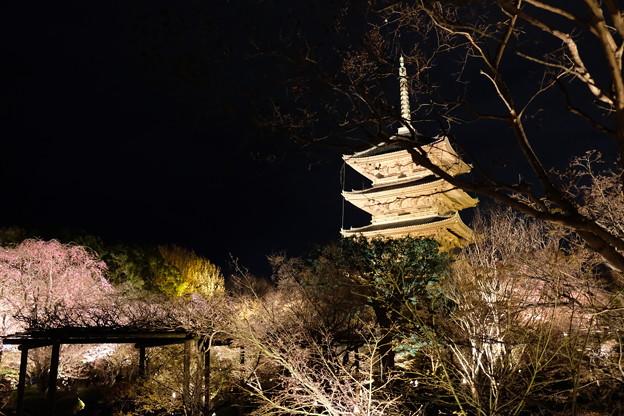2019-03-31-東寺夜間拝観_12