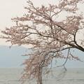 Photos: 春の琵琶湖