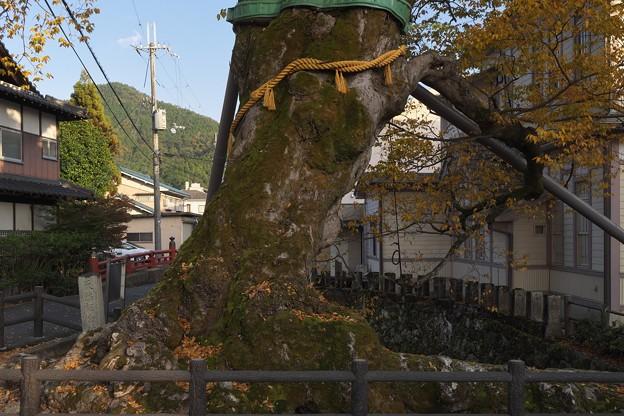 Photos: 木の根橋