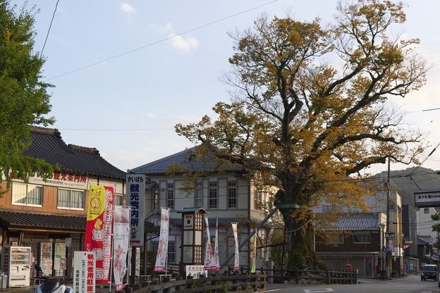 Photos: 木の根橋の大ケヤキ