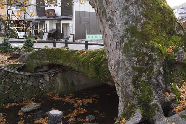 木の根橋ということで