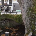 Photos: 木の根橋ということで