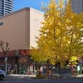 Photos: スーパー前の神社のイチョウ