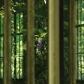 ワタシだけの植物園