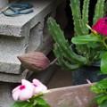 アノ花が・・・咲きそうです(/o\)