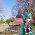 Photos: 初音ミク
