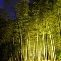 Photos: 竹林ライトアップ